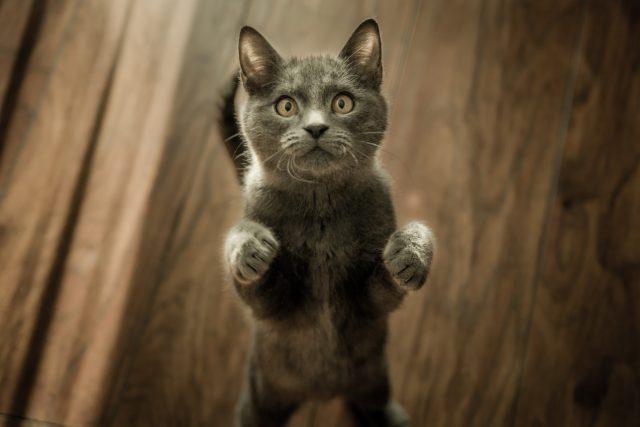 kot sztuczki